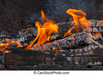 Burning wood in the fire close-up