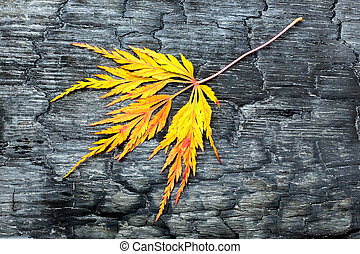 Burnt black wood with yellow fall leaf