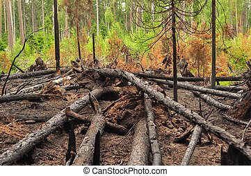 Burnt charred fallen trees after a forest fire