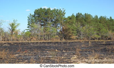 Burnt clearing in front of forest - Burnt clearing in front...
