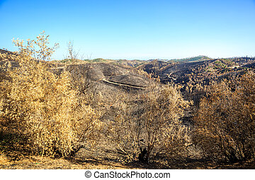 Burnt forest landscape