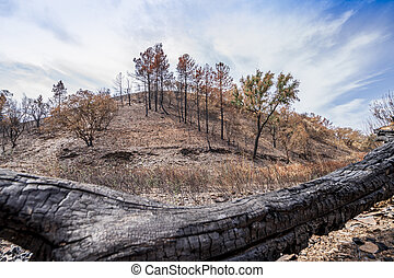 Burnt forest recovering after fire