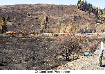 Burnt grass and trees after forest fire