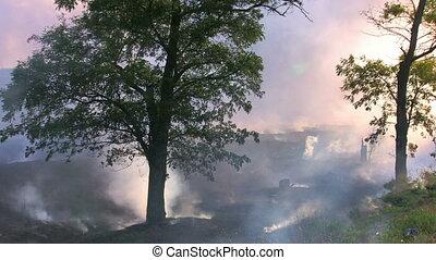 Burnt grass near the forest, smoke