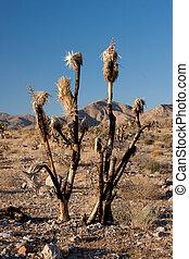 Burnt Joshua Tree on the American Desert