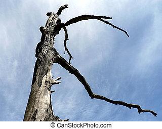 Burnt Tree 01