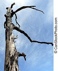Burnt Tree 02