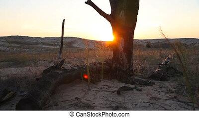 Burnt tree in the desert at sunset
