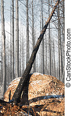 burnt tree in winter
