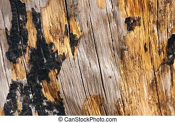 Burnt Tree Trunk Close Up