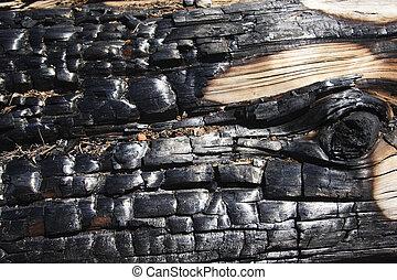 Burnt tree with eye