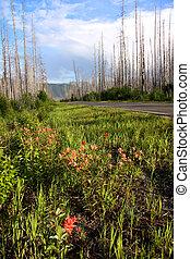 Burnt trees in Montana