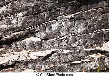 Burnt Wood Macro