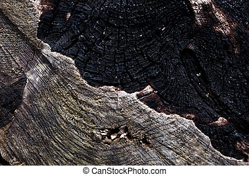 Burnt Wood