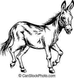 burro, estilizado, dibujo