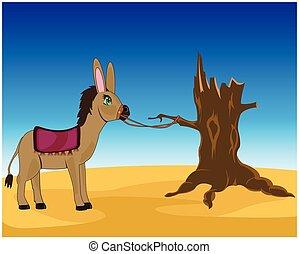 Burro in desert