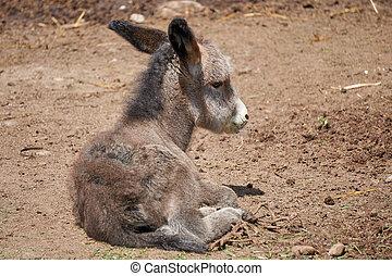 burro in the farm
