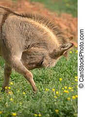 burro, paliza, cara