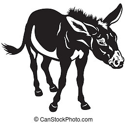 burro, pretas, branca