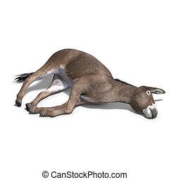 burro, render