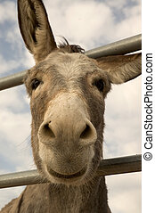 Burro Smile - Cute burro with big ears at 90 degree angle,...