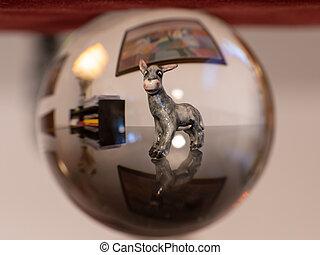 burro, vidrio, reflexión, pelota