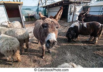 burros, fazenda