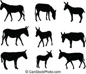 burros, mulas
