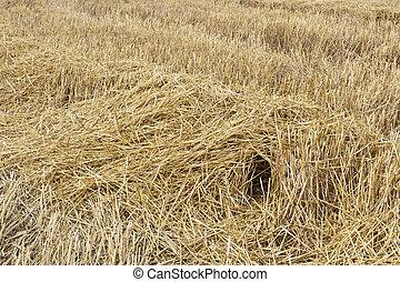 Burrow in a stubble field