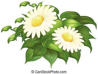 busch, blumen, grün weiß, gänseblumen