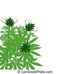 busch, grün, hanf