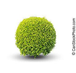 busch, grün