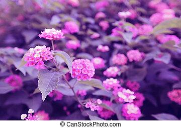 rosa bl ten rhododendron bl hen busch rosa closeup. Black Bedroom Furniture Sets. Home Design Ideas