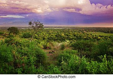 busch, tansania, afrikas, landschaftsbild