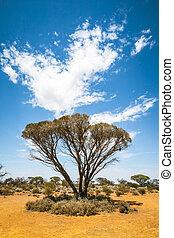 bush, árvore, austrália