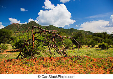 Bush and savanna landscape. Tsavo West, Kenya, Africa