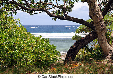 Bush and tree on the beach