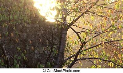 bush at sunny day