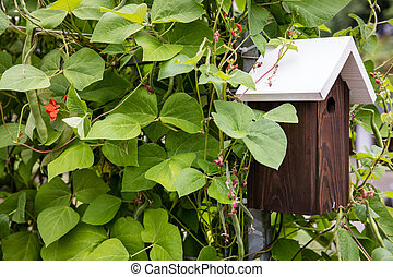 Bush beans and bird house
