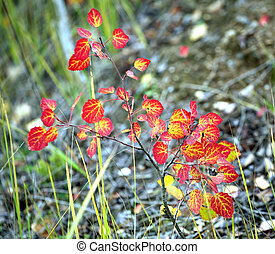 Bush branch with red leaves