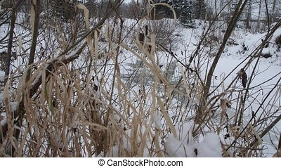 Bush branches covered with snow. Tall dry grass in the snow. Winter landscape.