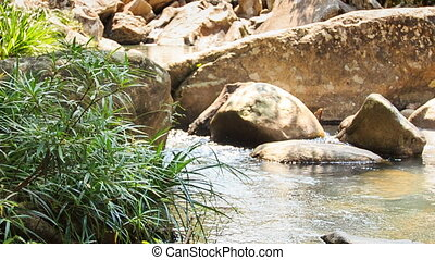 Bush by Small Rocky River Cascade with Waterfall
