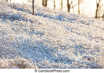 Bush covered in snow at winter day