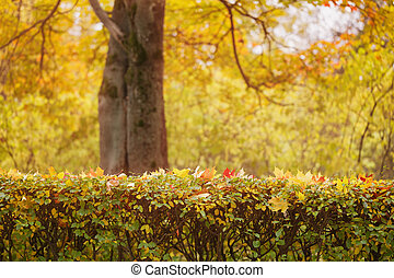 bush covered with autumn maple leaves