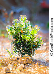 Bush covered with ice