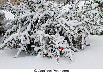 Bush covered with snow in park