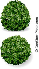 bush decorative boxwood - two round bush decorative plant...