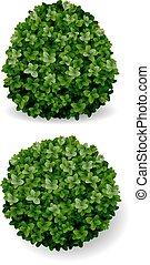 bush decorative boxwood - two round bush decorative plant ...