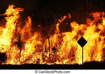 Bush fire close up at night