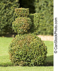Bush - Funny shaped bush